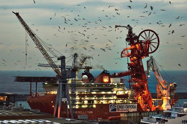 Cantiere navale con i suoi uccelli