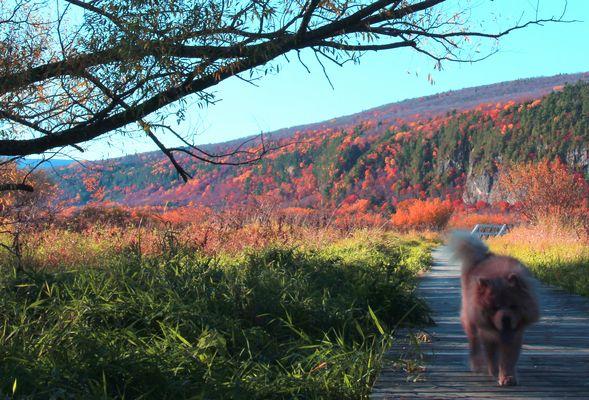 Cap-Tourmente en automne