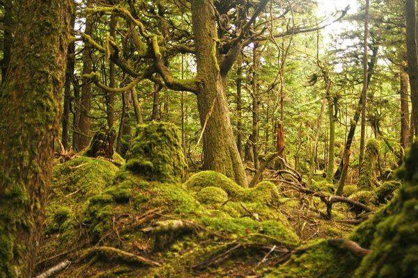 Cape Five Trail - Haida Gwaii - Kanada