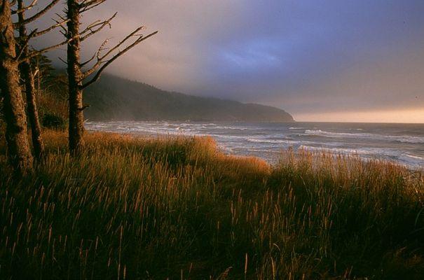Cape Lookout - Oregon