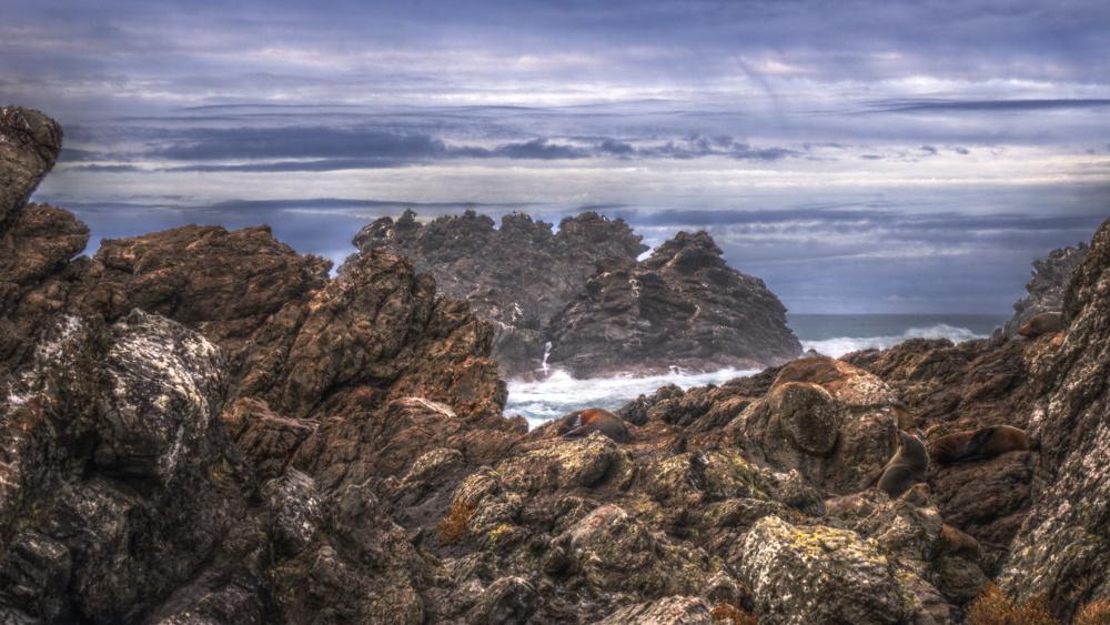 Cape Palliser I