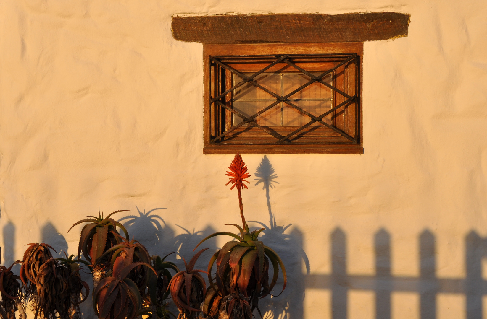 Capehausfenster mit Aloenschmuck