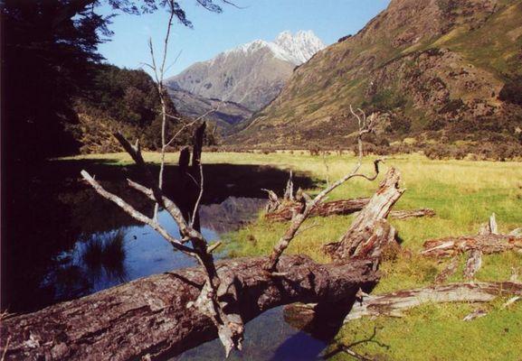 Caples Track New Zealand