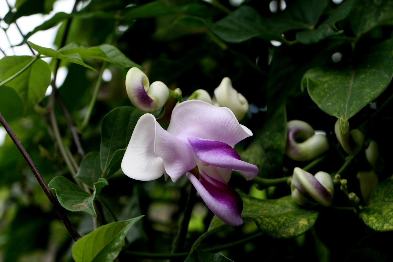 Capricho de flor
