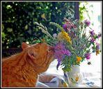 Caramel aime les fleurs