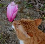 Caramel et la fleur de magnolia