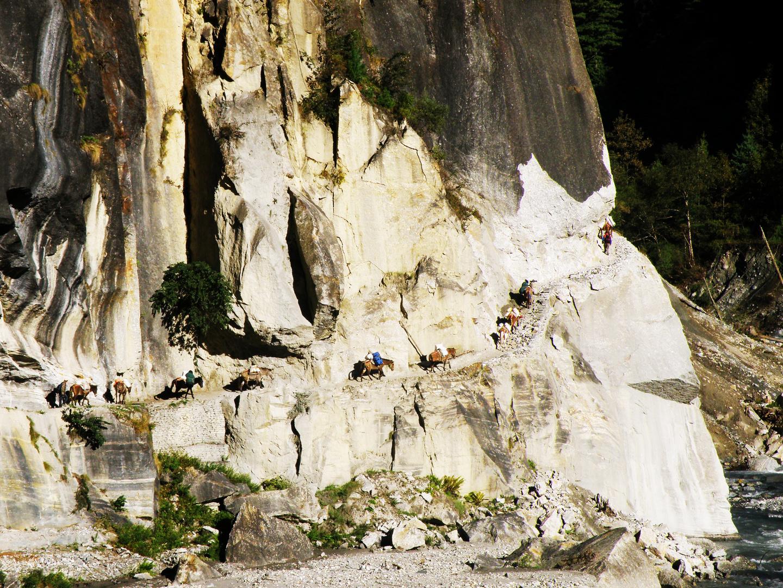Caravane d'ânes dans les Anapurnas