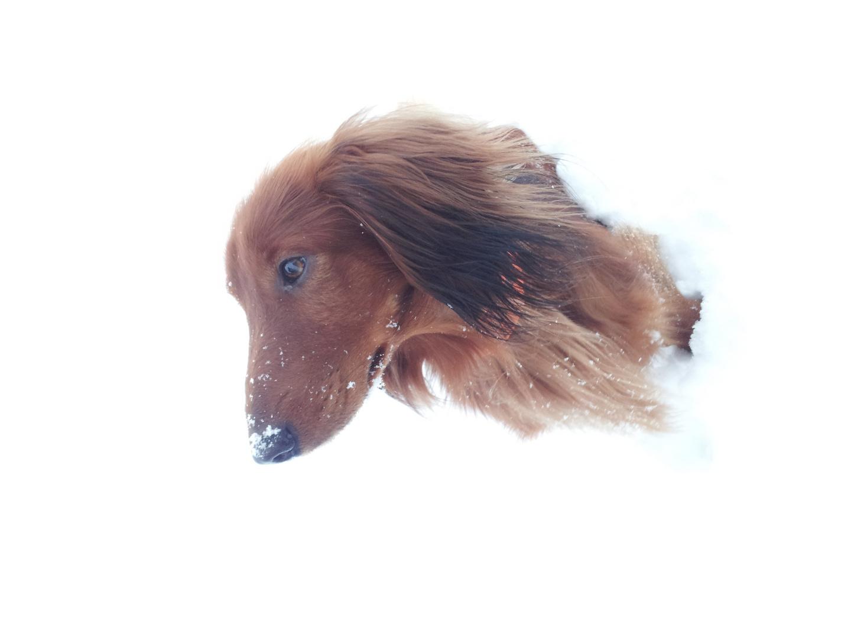 Cardo im Schnee