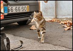 Carezze prego, domanda il gatto Félix.
