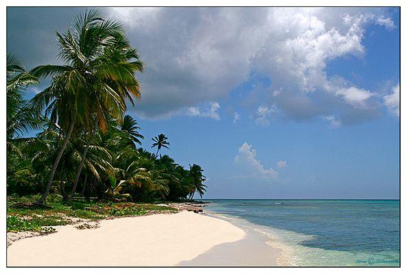 Caribic dream