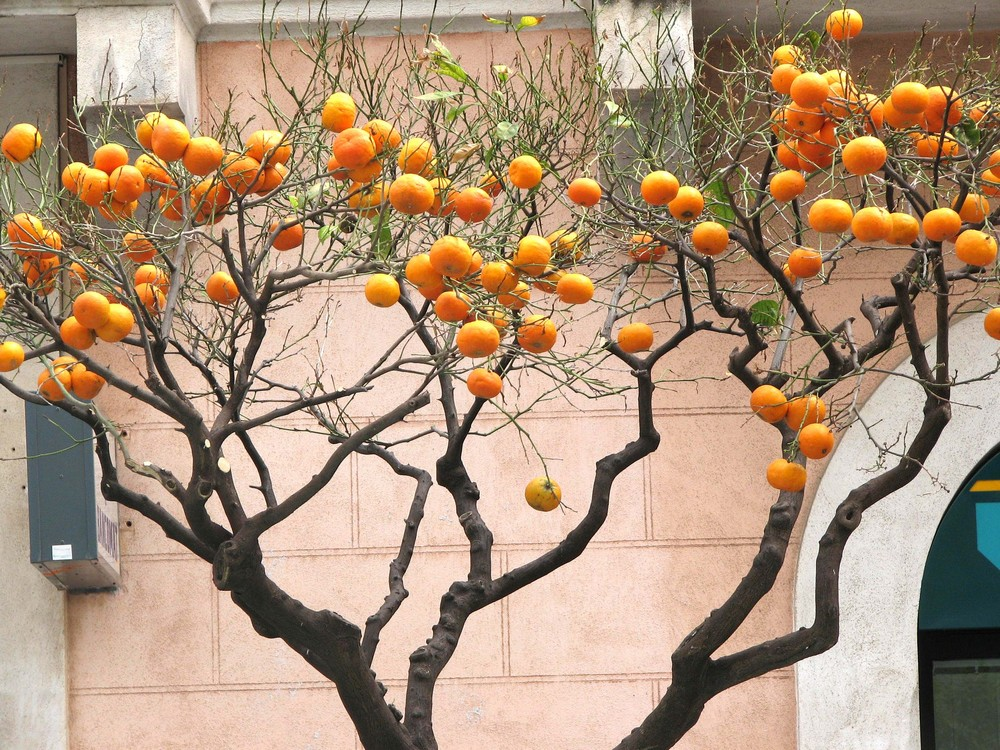 Carichi si arance