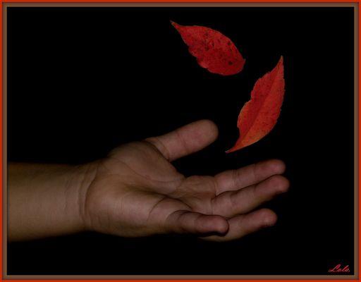 Caricia de otoño. (Proyecto. Dos hojas. Muchas ideas.)