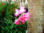 Carillon végétal