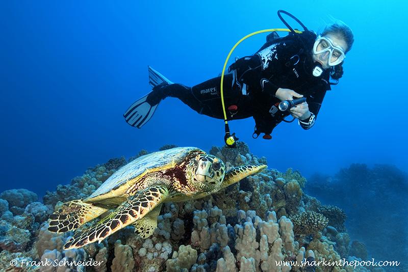 Carina mit Schildkröte