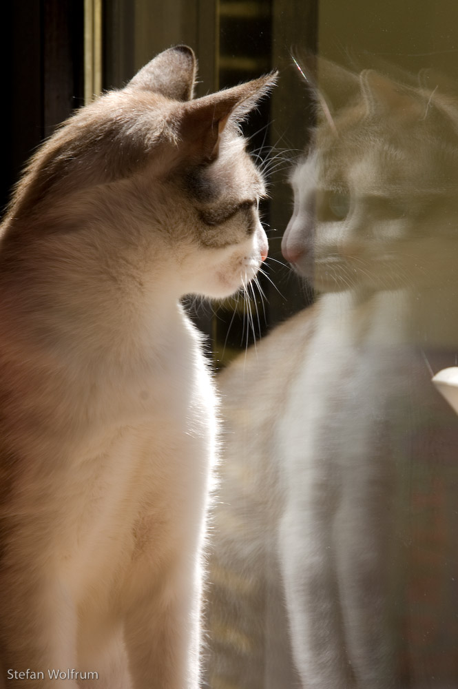 Cariño im Fenster