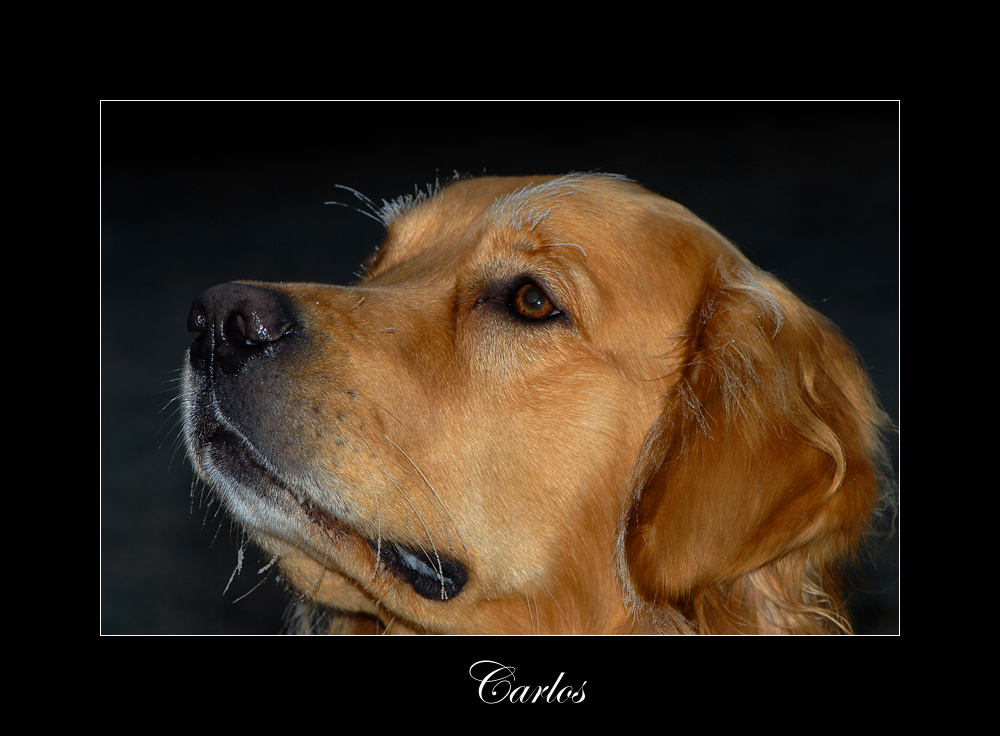 .....Carlos...