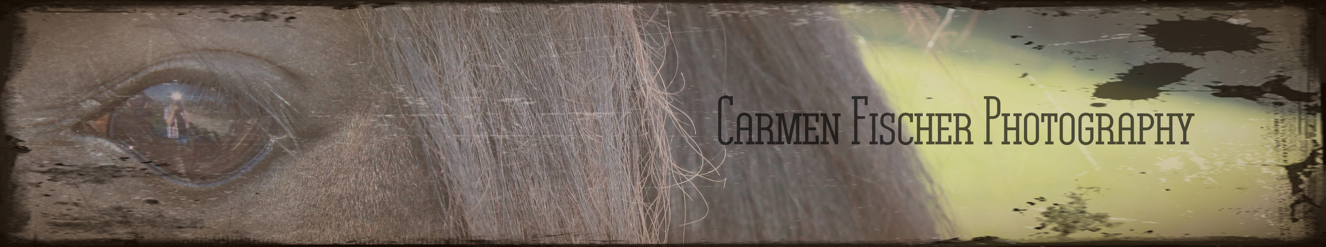 Carmen Fischer Photography