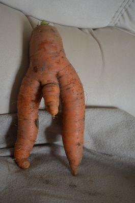 carotte exceptionnelle !!!!!!!!!!!!!!!!!!