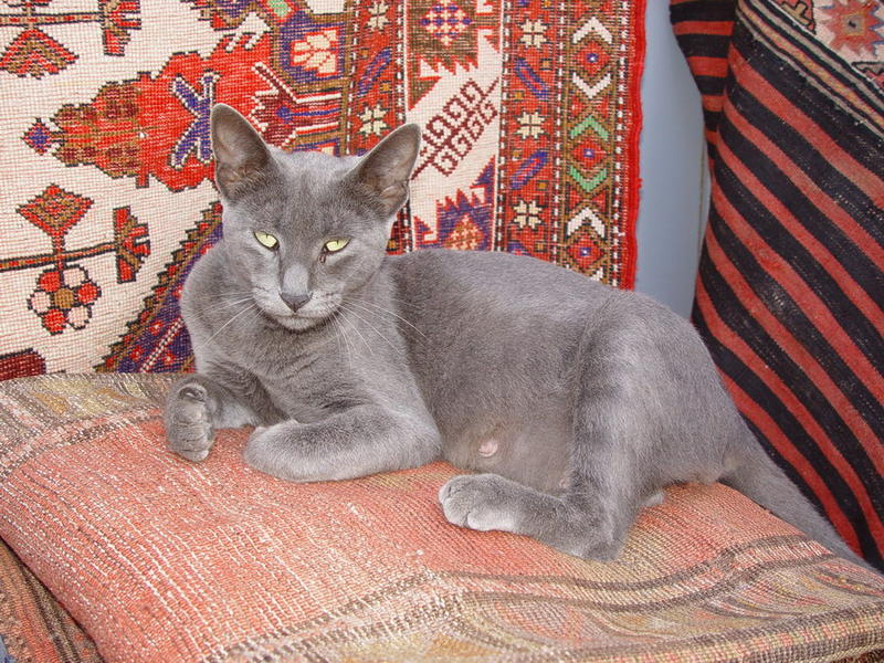 Carpet Cat