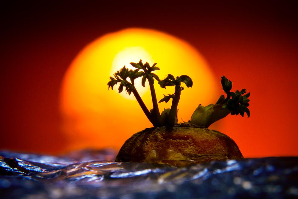 Carrot Island - Orange Sunset