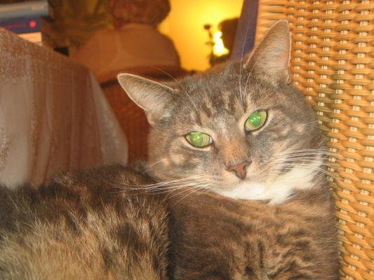 Caruso mit 3jahren