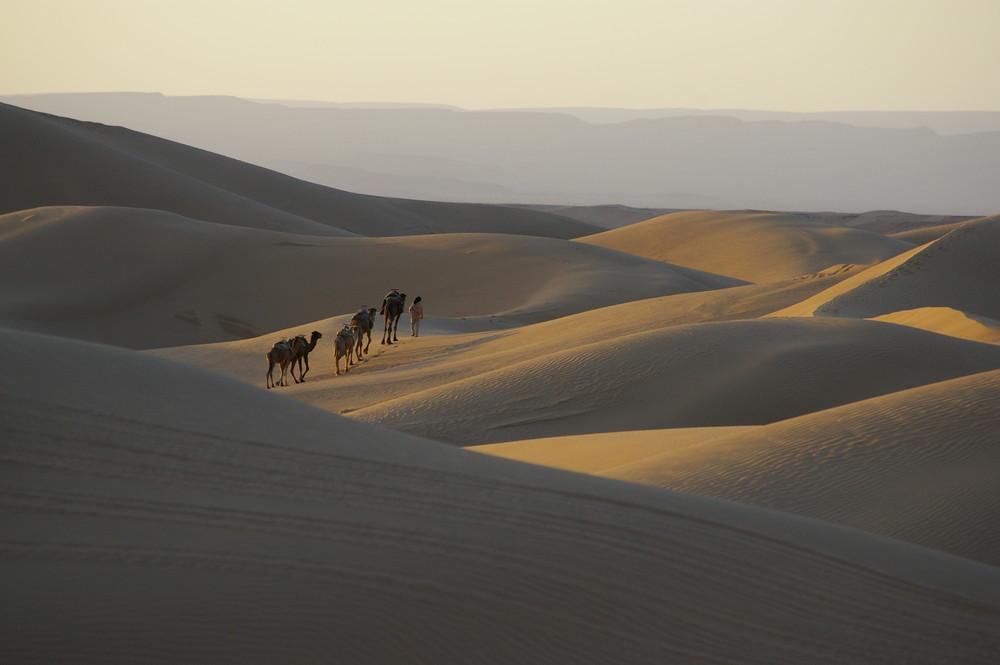 Carvane de dromadaire dans les dunes