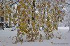 Cascade de feuilles enneigées