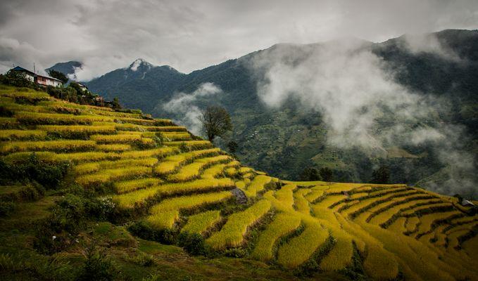 Cascade de riz