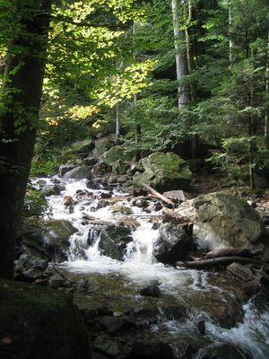 Cascade Tendon