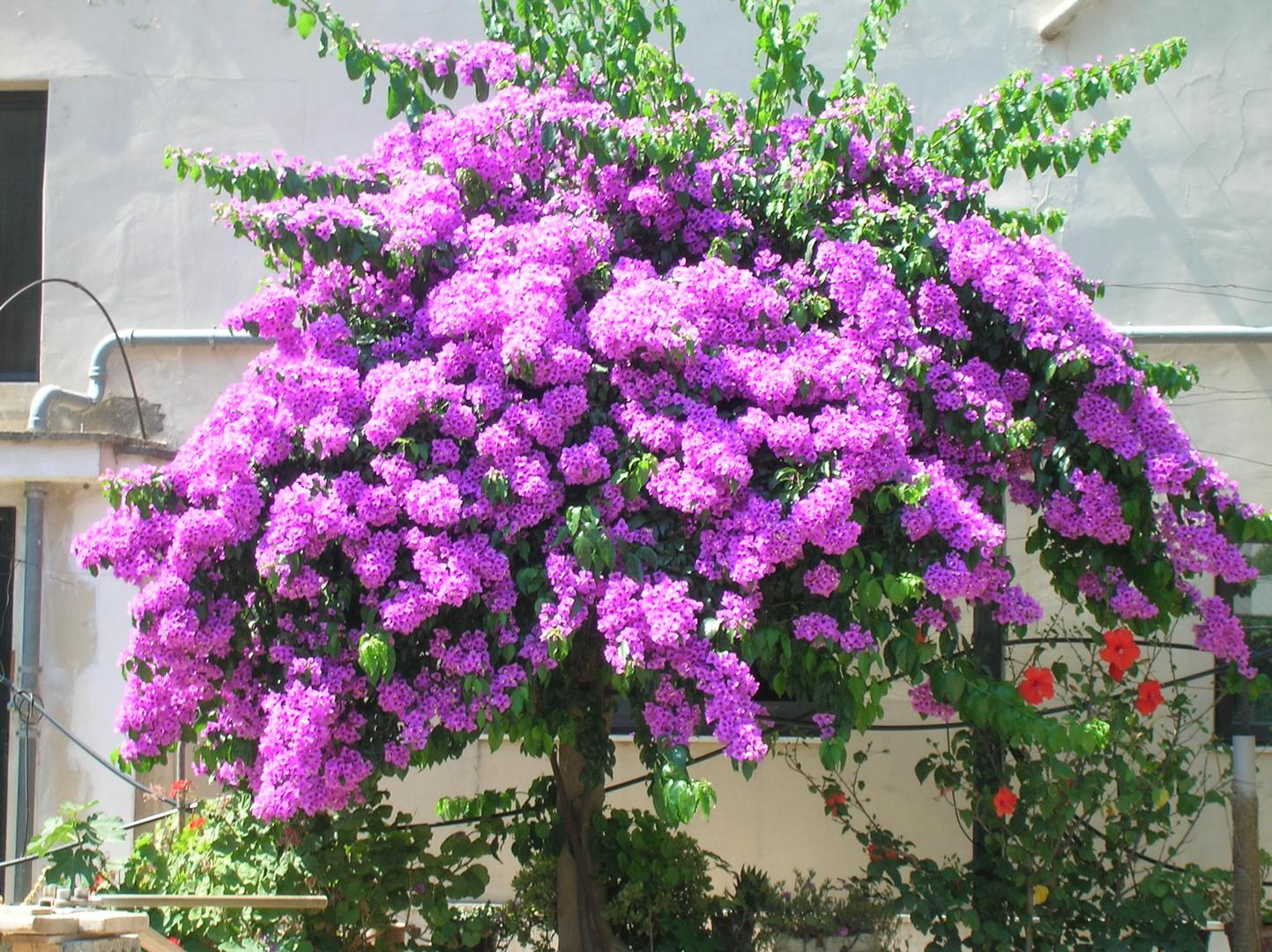 Pianta fiori viola fiori idea immagine for Pianta fiori viola
