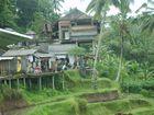 cases en toles devant les rizières