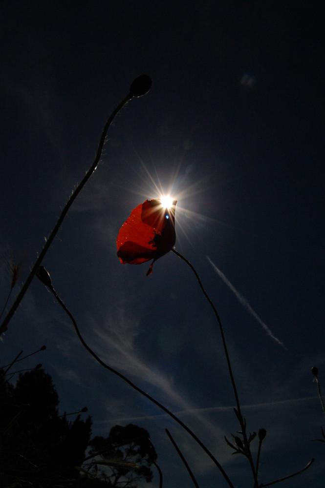 casi un eclipse