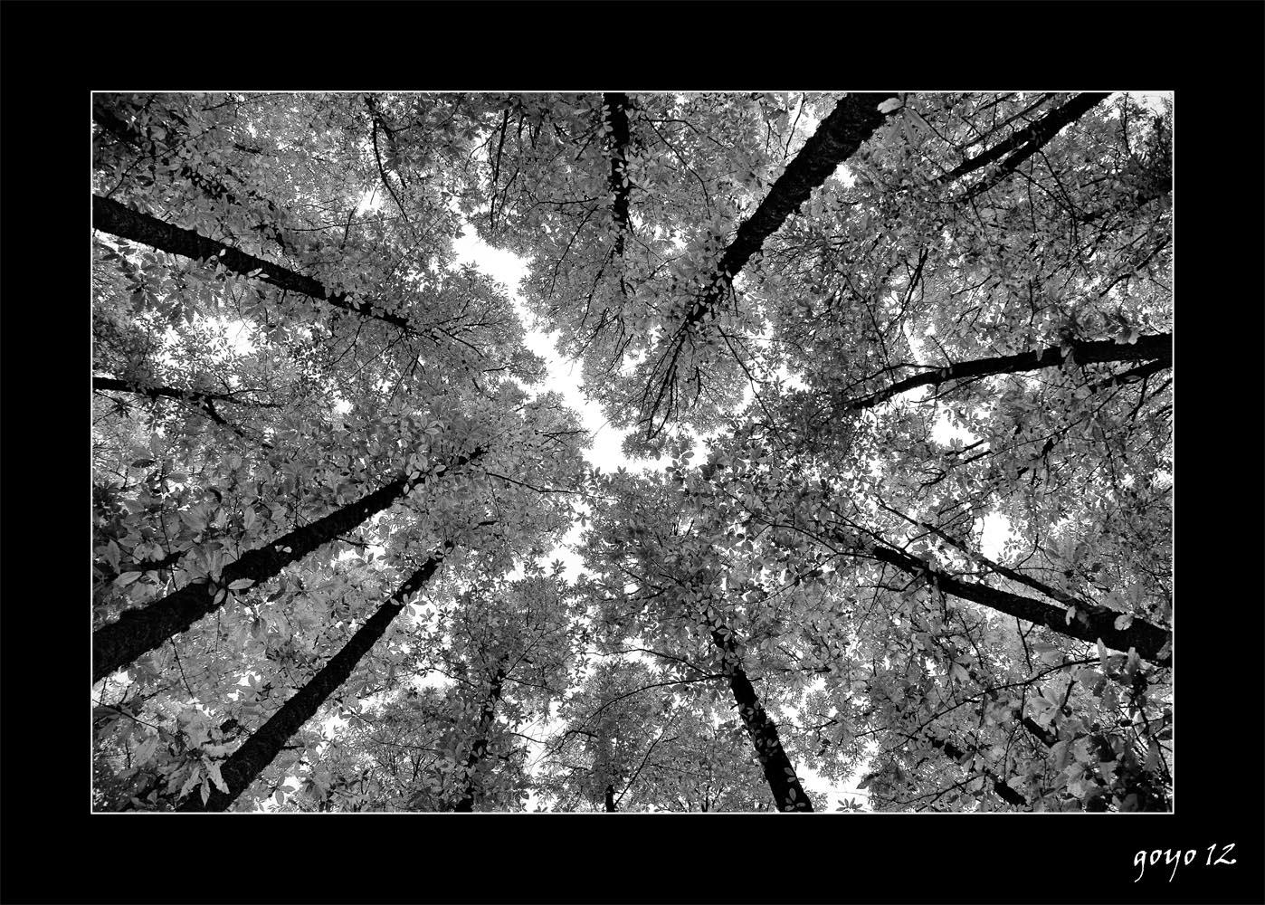 CASTAÑAR DE EL TIEMBLO (AVILA) para mi tocayo Goyo Alonso