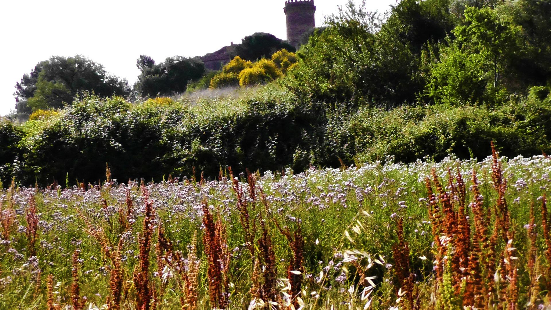 Castillo al final del prado