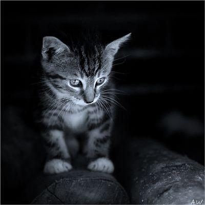 .cat.