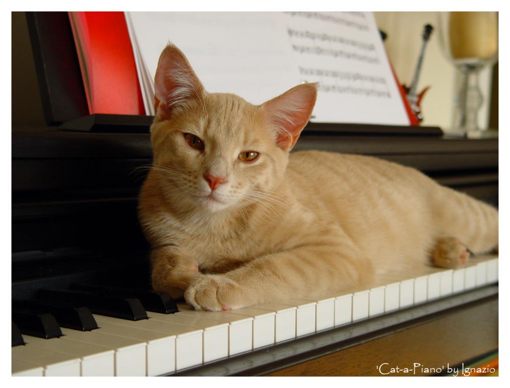 Cat-a-Piano
