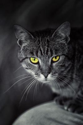 - CAT -