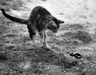 Cat and adder