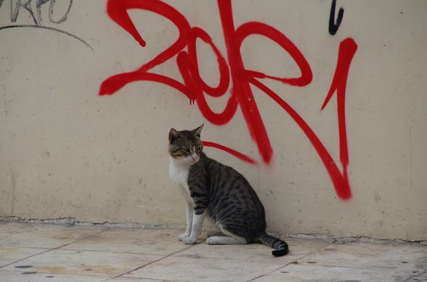Cat and tag...