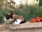Cat at Finca