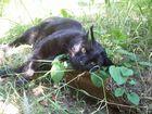 Cat Bronzette