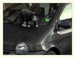 Cat-Car = Car-Cat ?