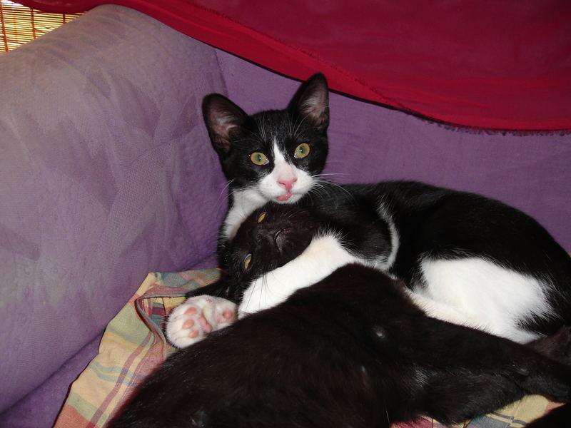 CAT-cherin
