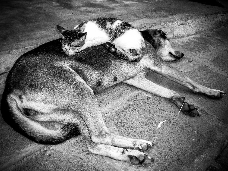 Cat & dog in harmony