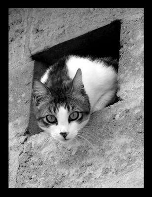 Cat-e-mini
