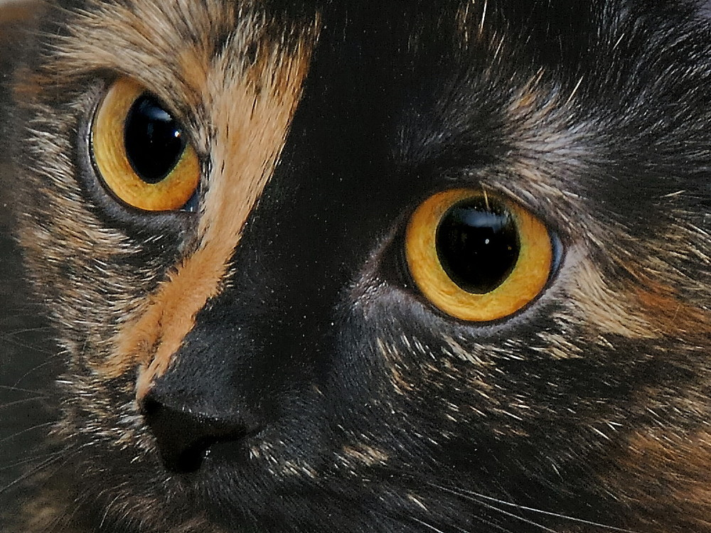 Cat Eyes...