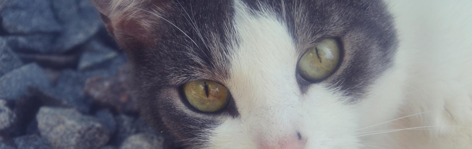 #cat #eyes
