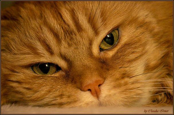 cat eyes ..