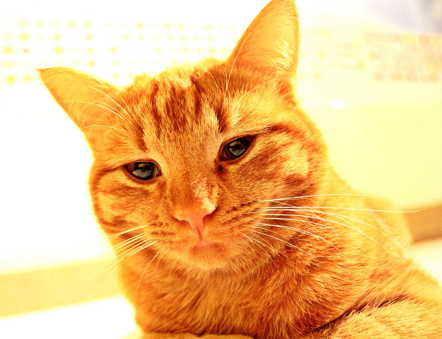 cat, I´m a kitty cat.