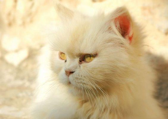 cat in a monastry in Crete